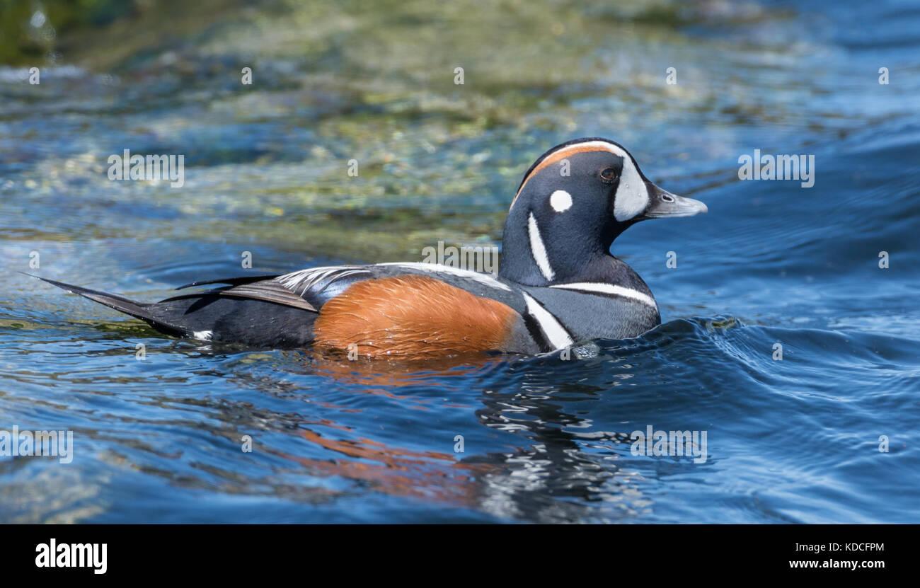 Sunrise Duck Hunting Stock Photos & Sunrise Duck Hunting ... - photo#10