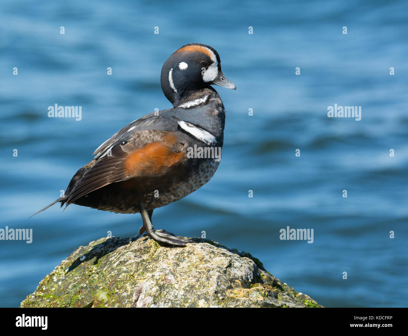 Duck Hunting Sunset Stock Photos & Duck Hunting Sunset ... - photo#21