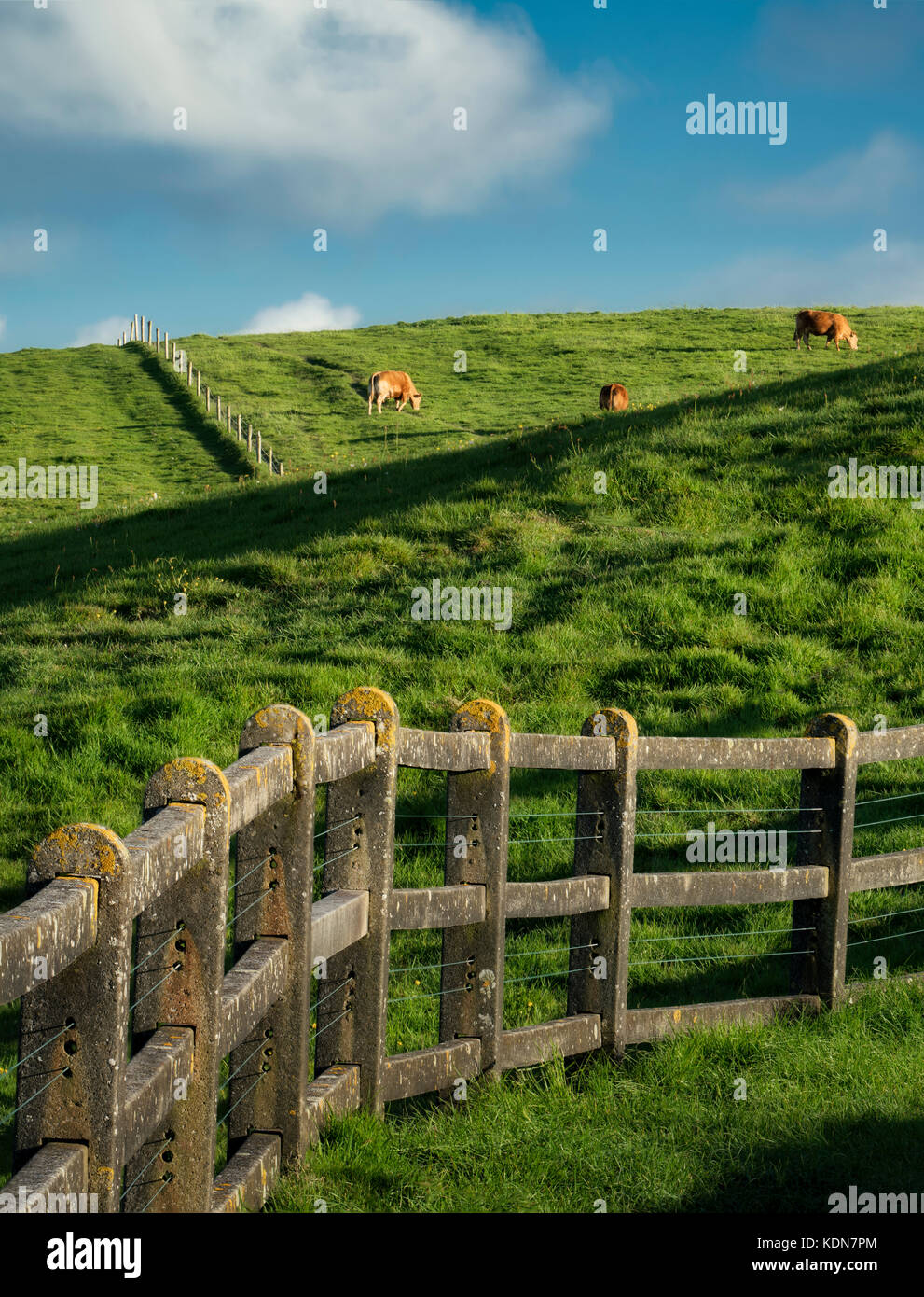 Line Of Cows Stock Photos Amp Line Of Cows Stock Images Alamy