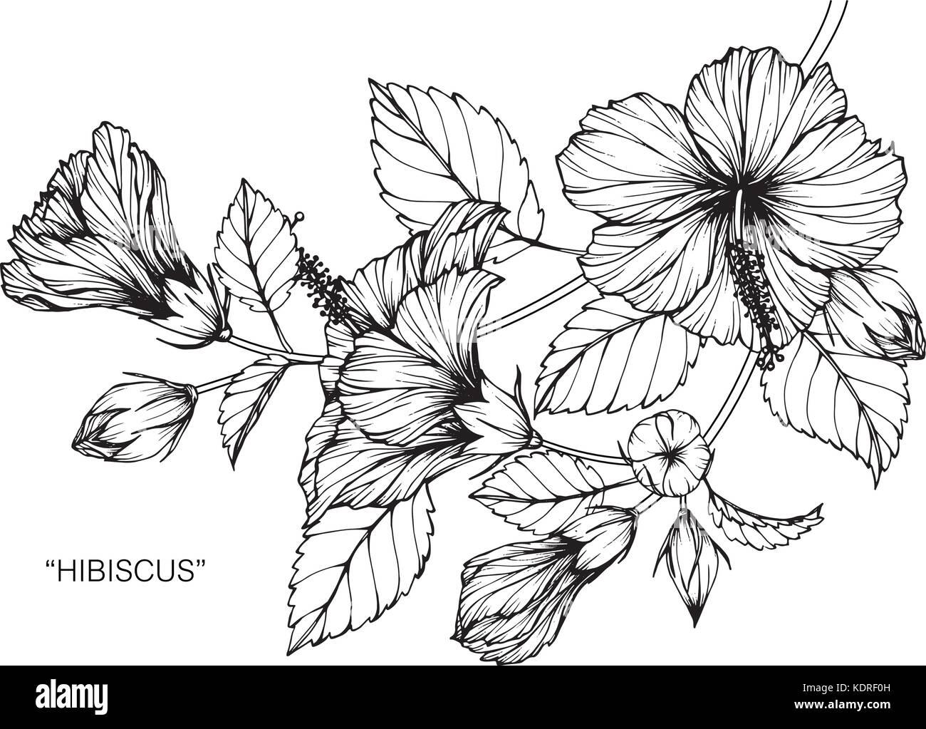 Hawaiian hibiscus flower drawings animalcarecollegefo hawaiian hibiscus flower drawings izmirmasajfo