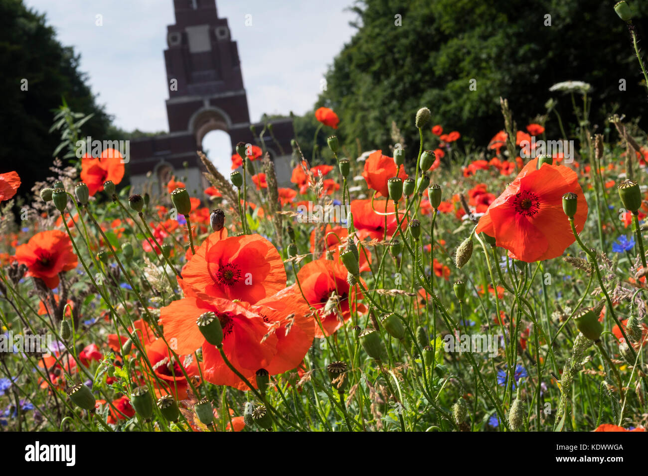 War Graves And Poppies Stock Photos Amp War Graves And