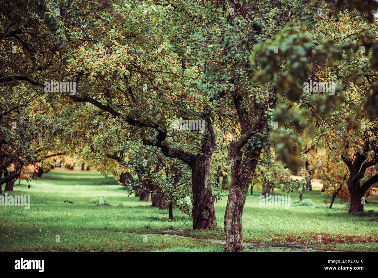 Green autamn trees in the park in october. Vintage color. Retro ...