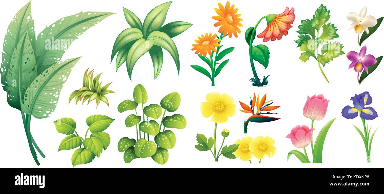 different types of flowers and leaves illustration stock vector art