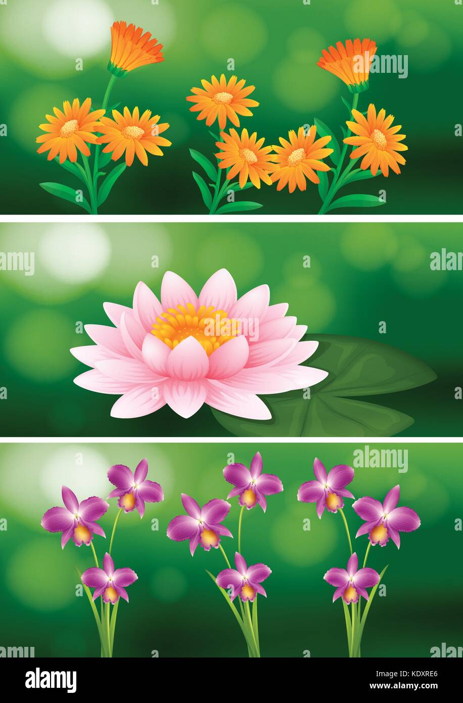 Background Design With Different Types Of Flowers Illustration Stock