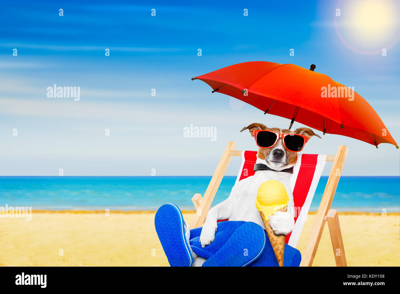 jack russell dog eating ice cream on a cone waffle on a beach chair or hammock with sunglasses on summer vacation holidays jack russell dog eating ice cream on a cone waffle on a beach      rh   alamy
