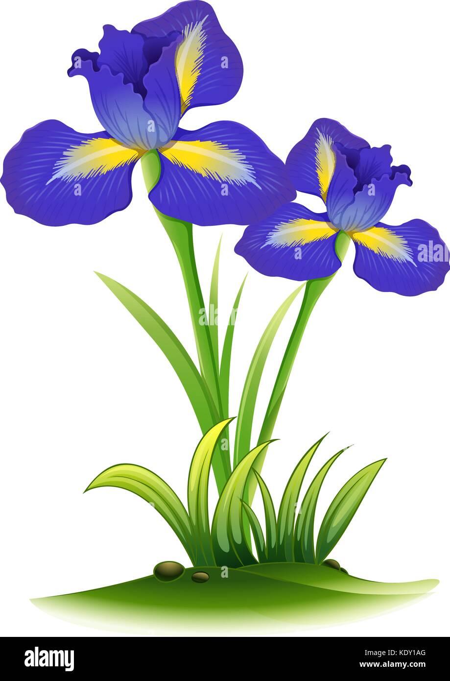 blue iris flowers in bush illustration stock vector art rh alamy com