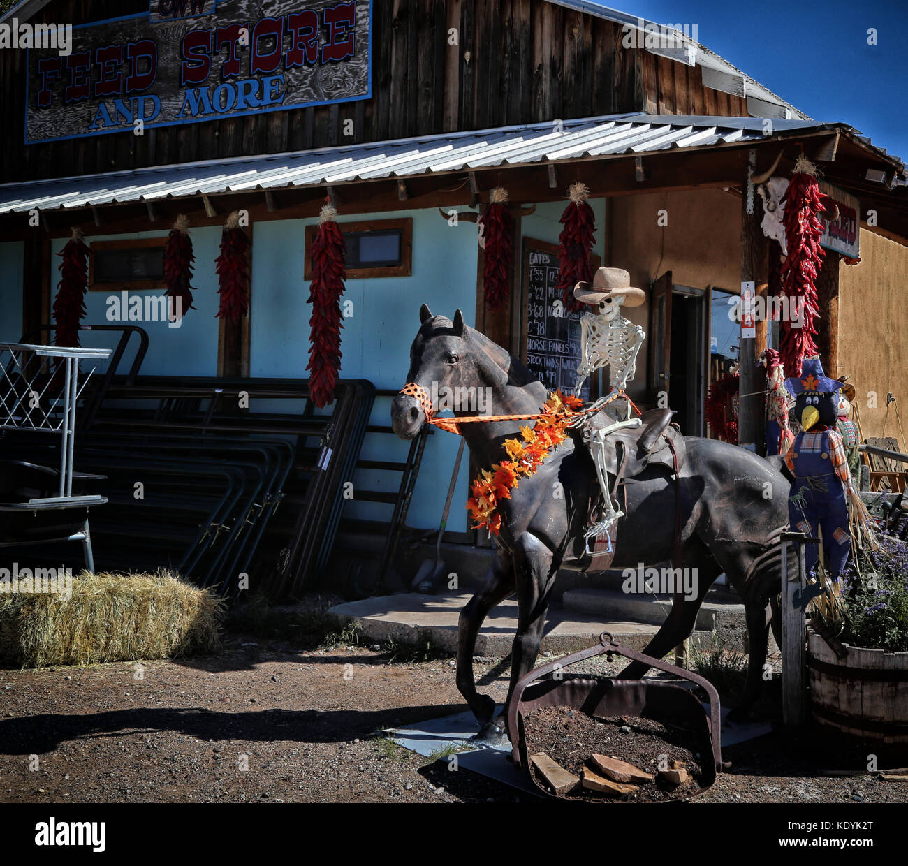 """halloween in new mexico -- skeleton """"rides"""" a horse at feed store in"""
