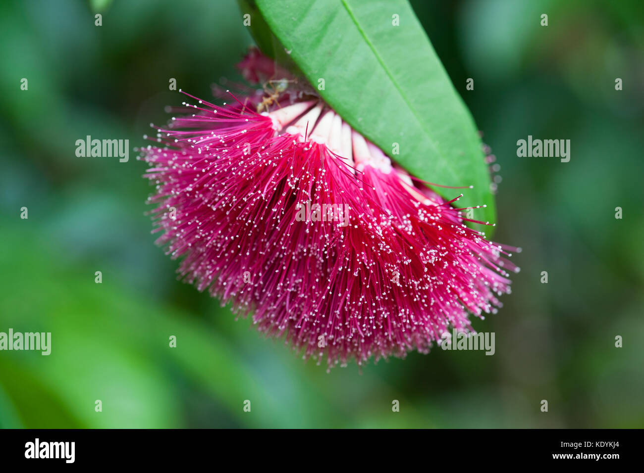 Pilly stock photos pilly stock images alamy for Diwan name wallpaper