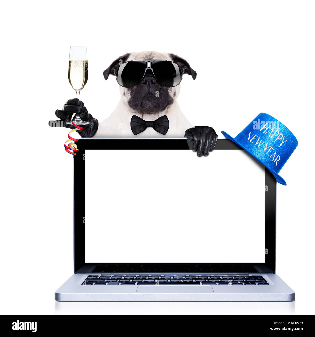 pug dog behind a laptop pc laptop computer screen isolated on stock
