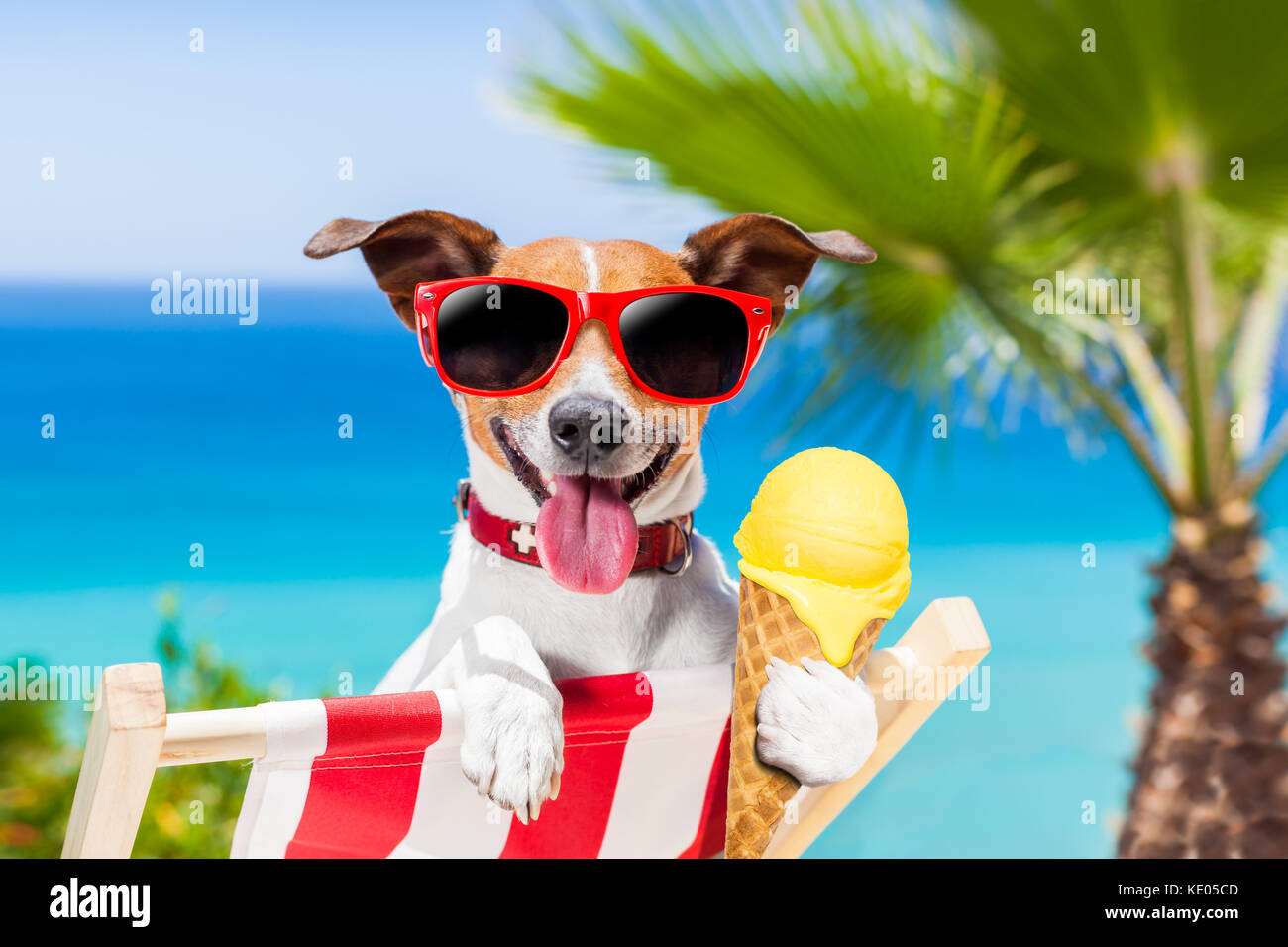 jack russell dog on hammock at the beach relaxing on summer vacation holidays eating a fresh lemon or vanilla ice cream on a cone waffle jack russell dog on hammock at the beach relaxing on summer stock      rh   alamy