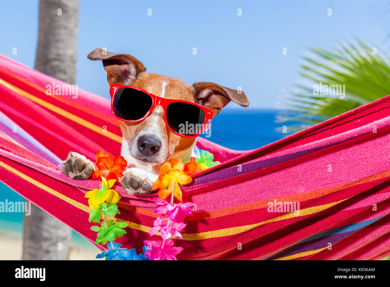 Dog Deck Chair Stock Photos Amp Dog Deck Chair Stock Images