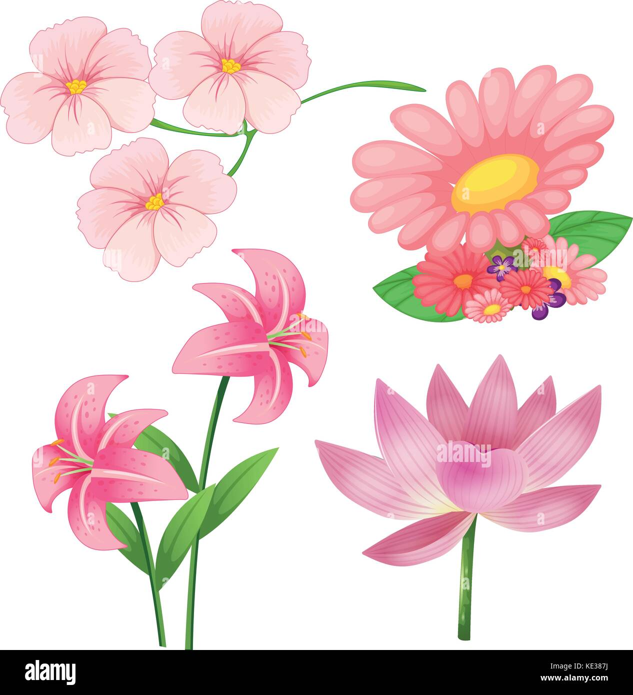 Set Of Different Kind Of Pink Flowers On White Background Stock