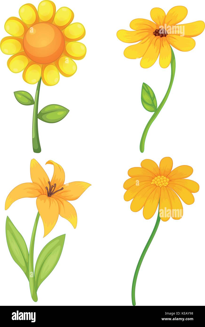 Four Different Kinds Of Yellow Flowers Stock Vector Art