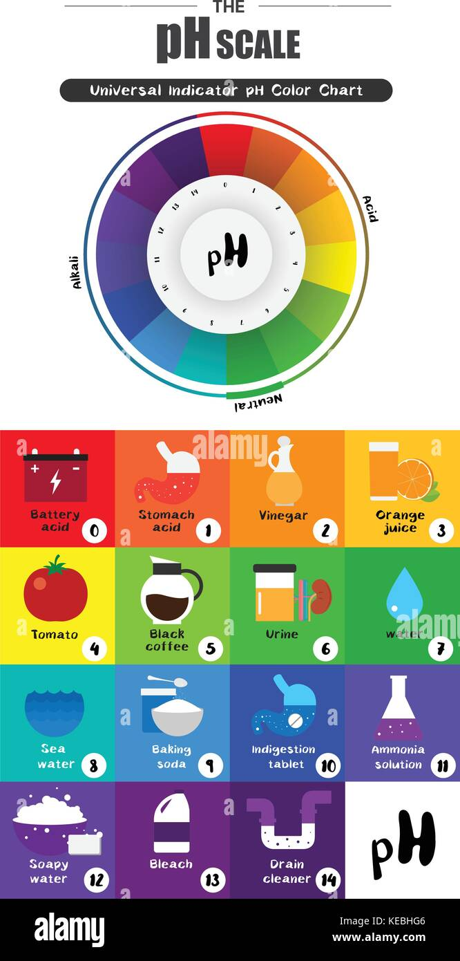 The ph scale universal indicator ph color chart diagram acidic the ph scale universal indicator ph color chart diagram acidic alkaline values common substances vector illustration flat icon design colorful nvjuhfo Images