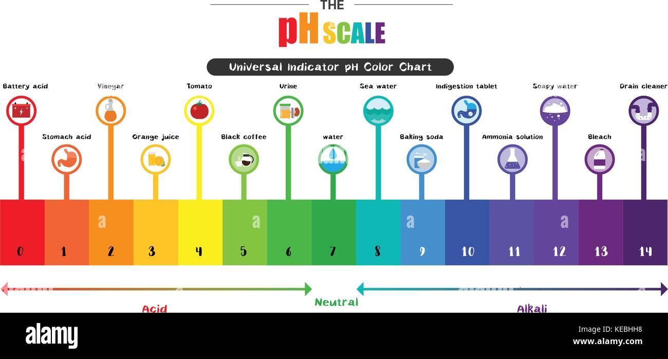 Universal indicator stock photos universal indicator stock the ph scale universal indicator ph color chart diagram acidic alkaline values common substances vector illustration nvjuhfo Images