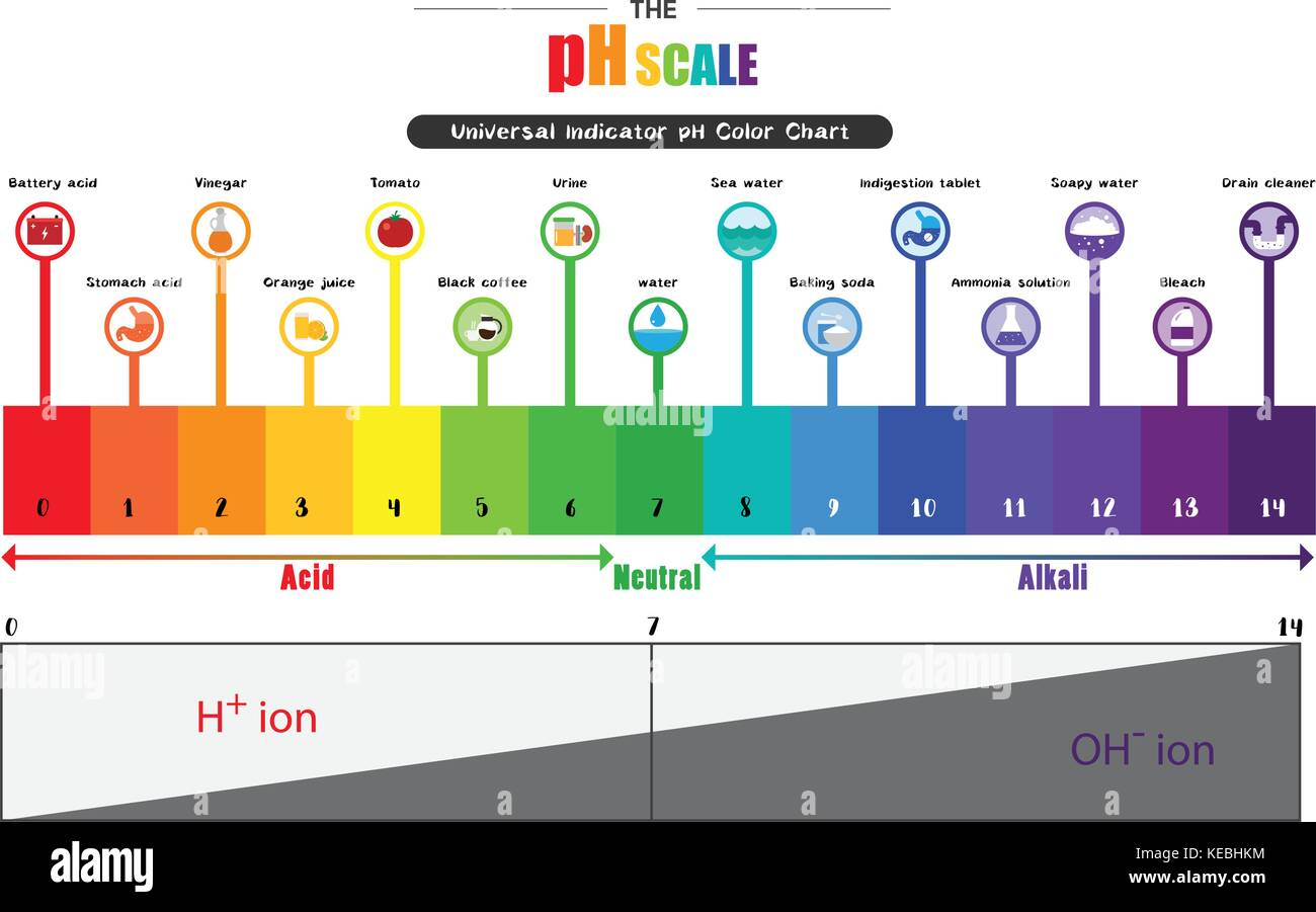 Universal Indicator Stock Photos  for Ph Scale Universal Indicator  5lpkxo