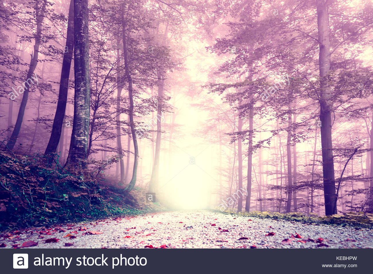 Fantasy Purple Color Foggy Forest Road Dreamy Fairytale Color