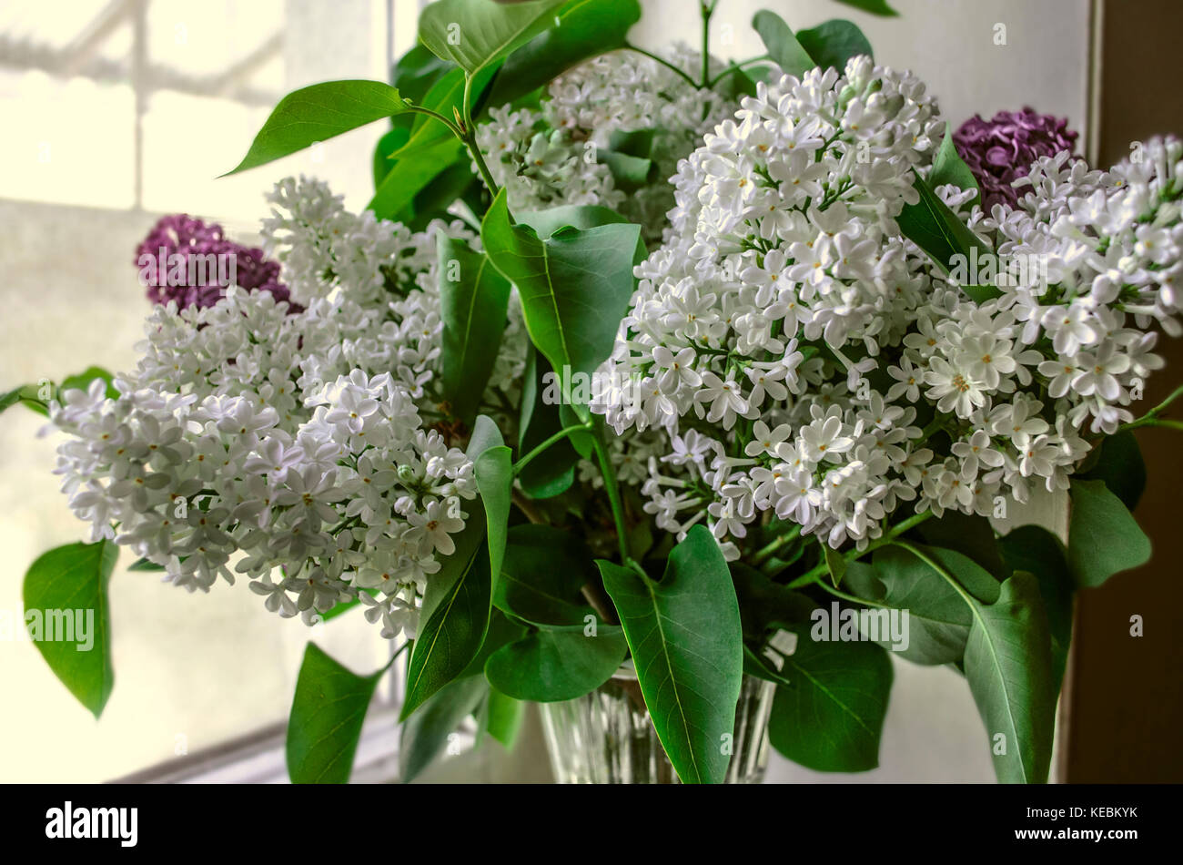 Lilac colored crystal stock photos lilac colored crystal stock bouquet of white lilac in a crystal vase by the window stock image reviewsmspy