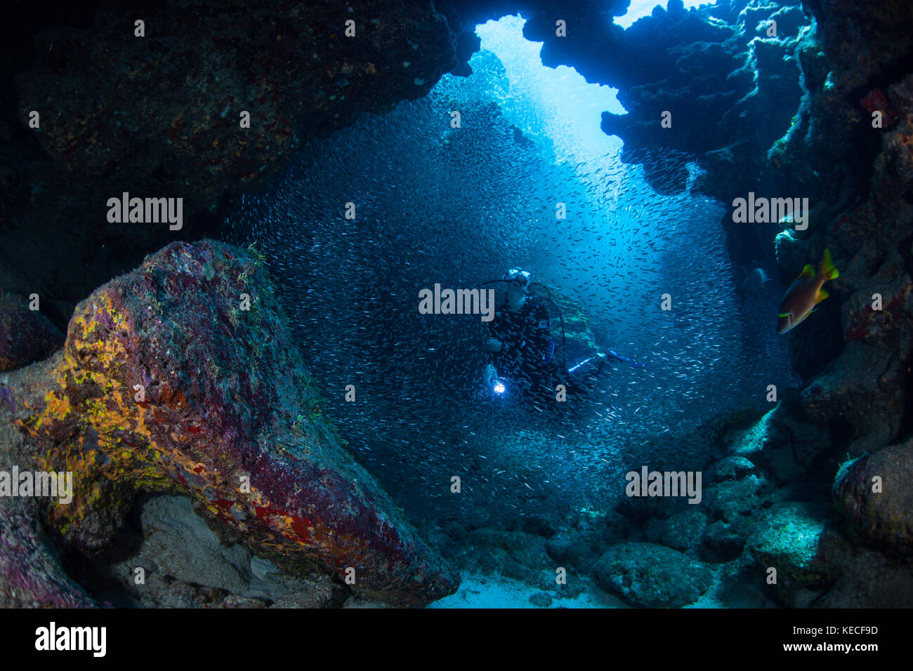 Deep sea fish dark stock photos deep sea fish dark stock for Deep sea fishing grand cayman