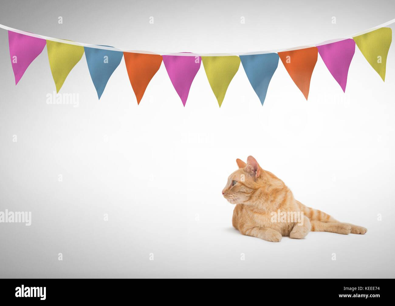 digital composite of cat looking left under colorful flag banner