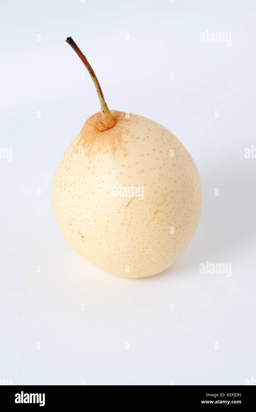 Shinko asian pear edible landscaping - Pyrus Piyrifolia Cut Out Stock Image