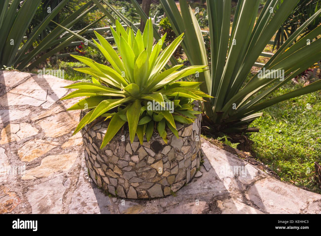 Garden ideas recycling old tires into garden planters Stock Photo ...