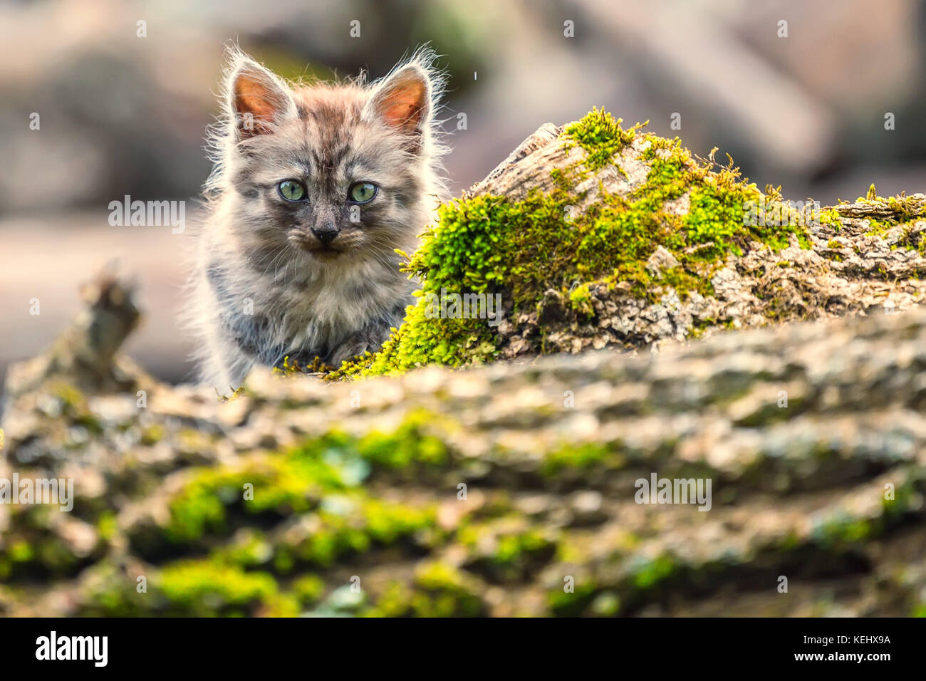 stray kitten stock photos u0026 stray kitten stock images alamy