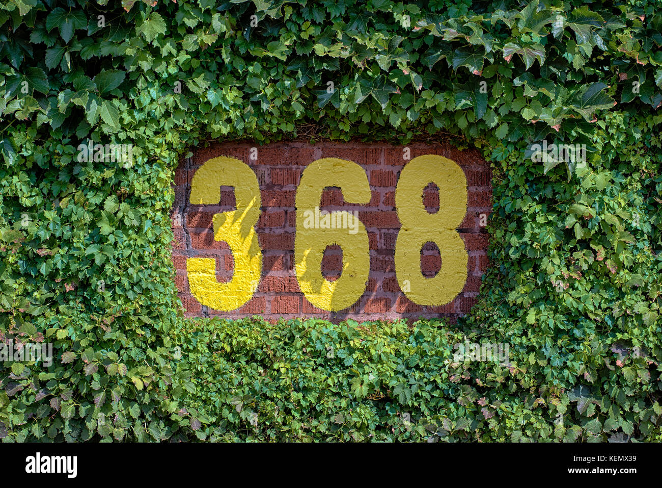 368 feet sign on the outfield wall of wrigley field in chicago stock 368 feet sign on the outfield wall of wrigley field in chicago illinois buycottarizona Images
