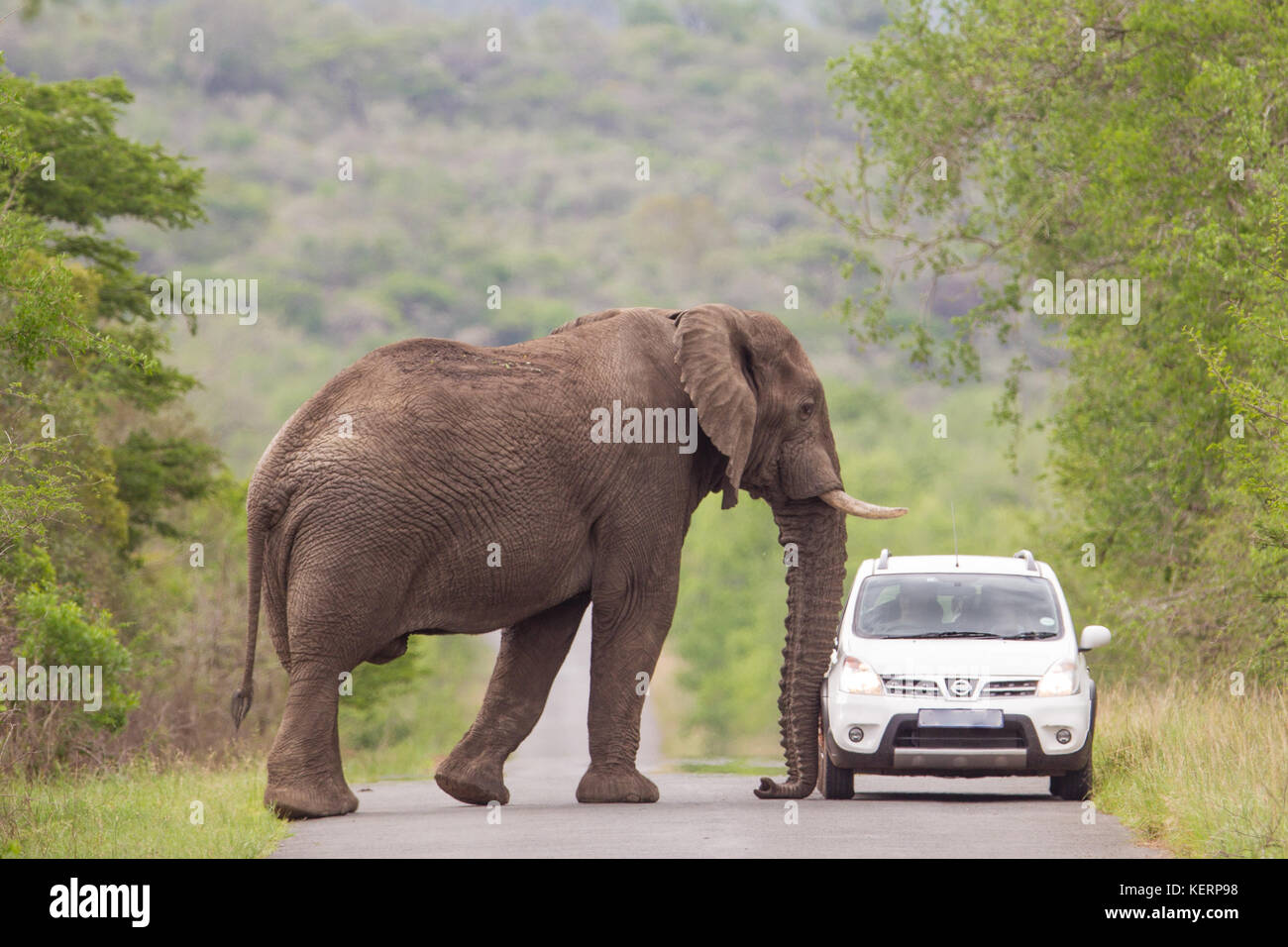 Elephant Auto Insurance Quote Elephant Car Stock Photos & Elephant Car Stock Images  Alamy