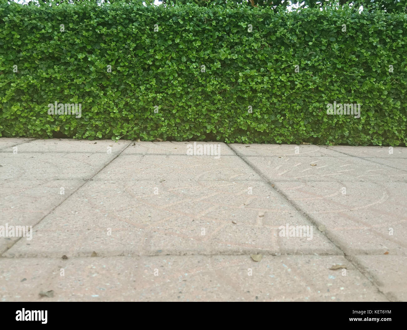 Green flooring stock photos green flooring stock images for Green floor plant