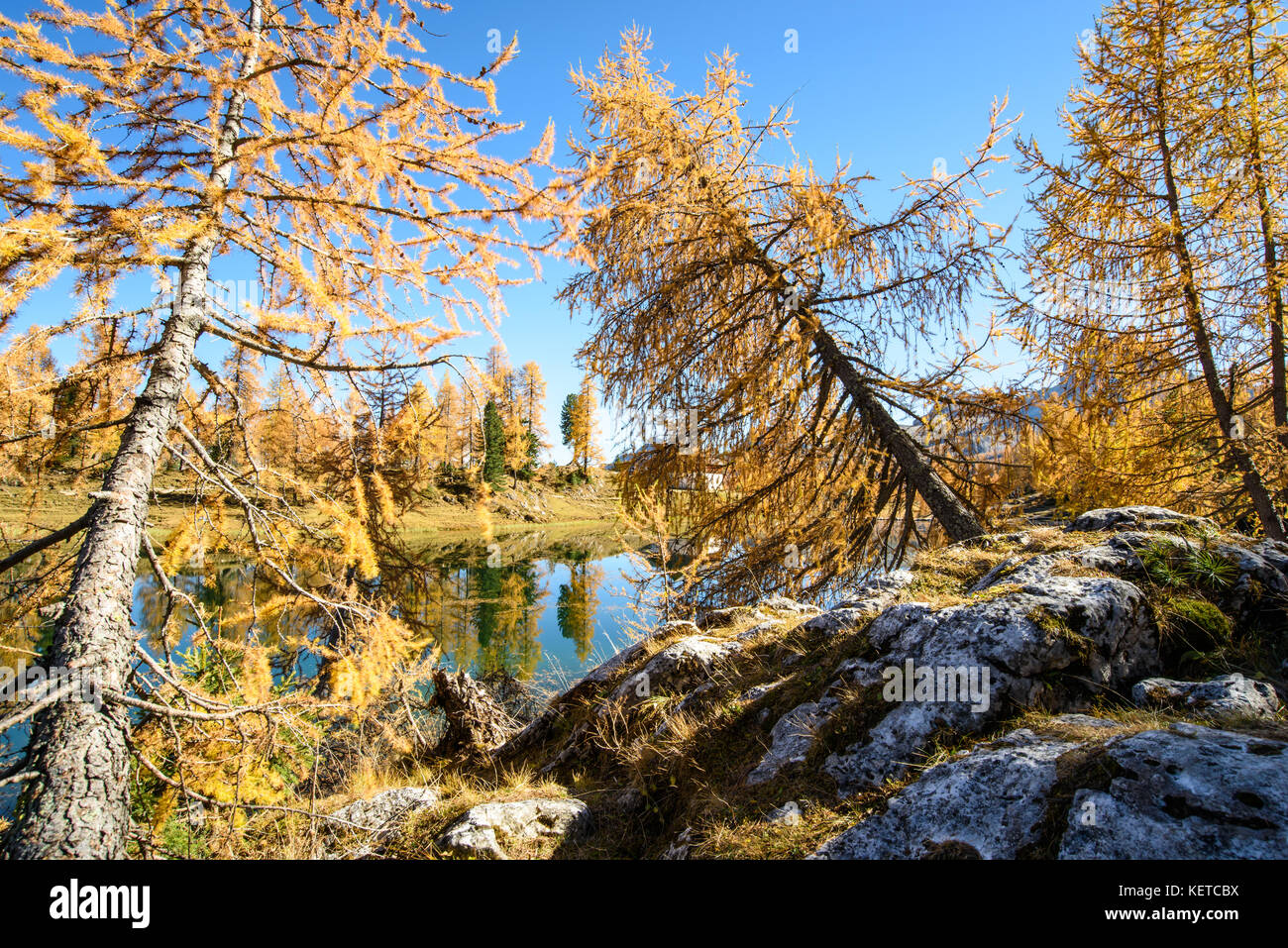 Larch Forest In Autumn View Stock Photos & Larch Forest In ...