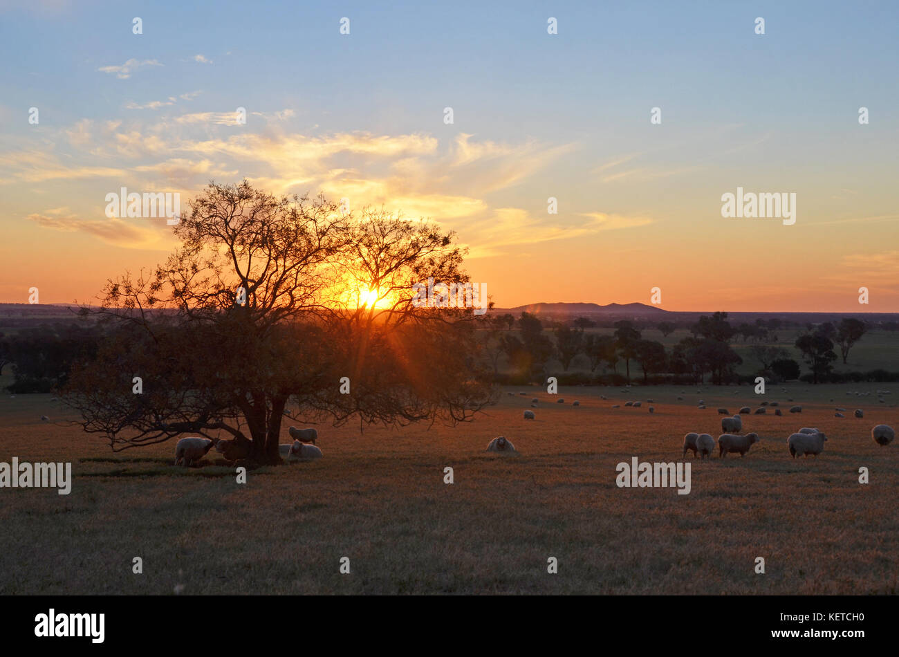 Country dating nsw
