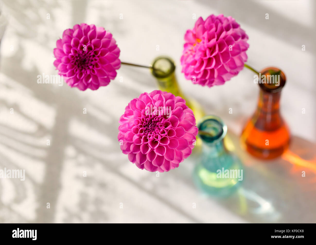 Pink pompom dahlias in colorful glass vases beside a lace pink pompom dahlias in colorful glass vases beside a lace curtained window reviewsmspy