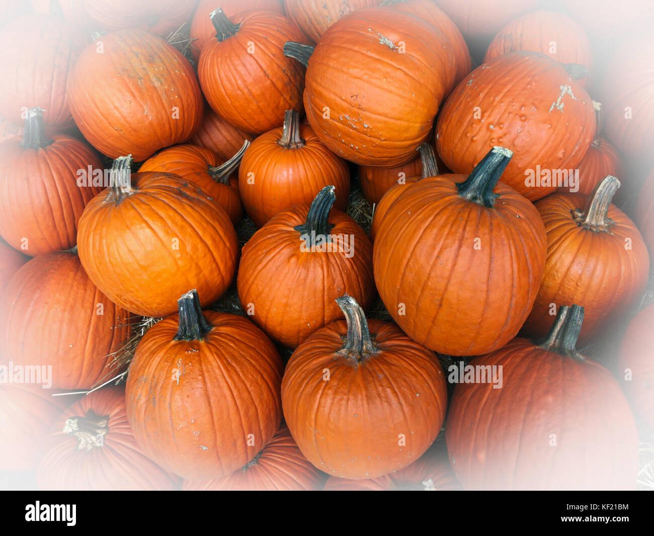 Festive Pile Of Orange Autumn Pumpkins At A Farmeru0027s Market Ready For  Halloween Holiday