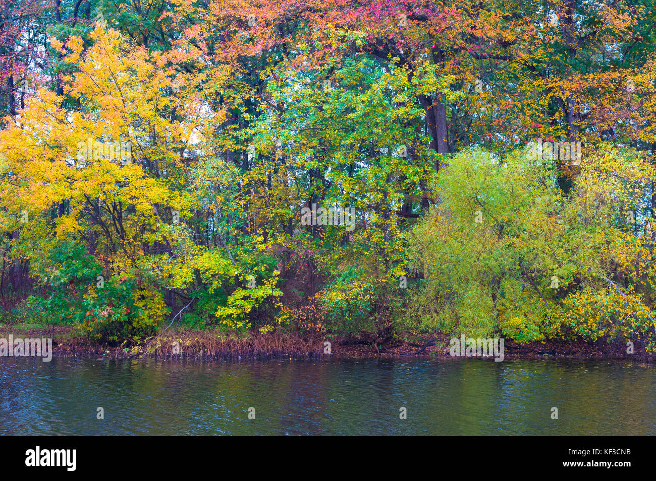 Trees with leaves turning bright, bold colors in Autumn are on the ...