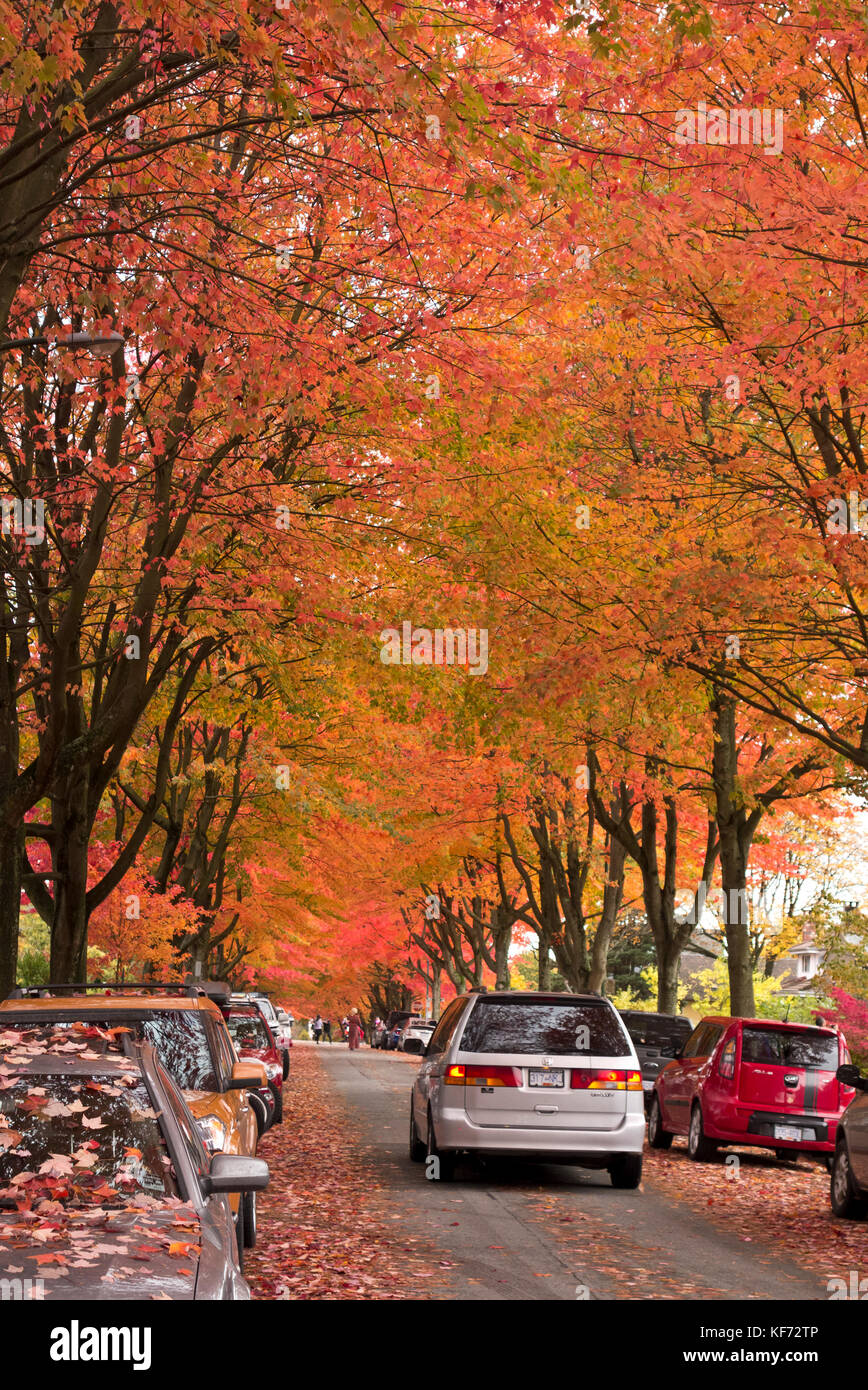 beautiful-autumn-colours-in-the-trees-in