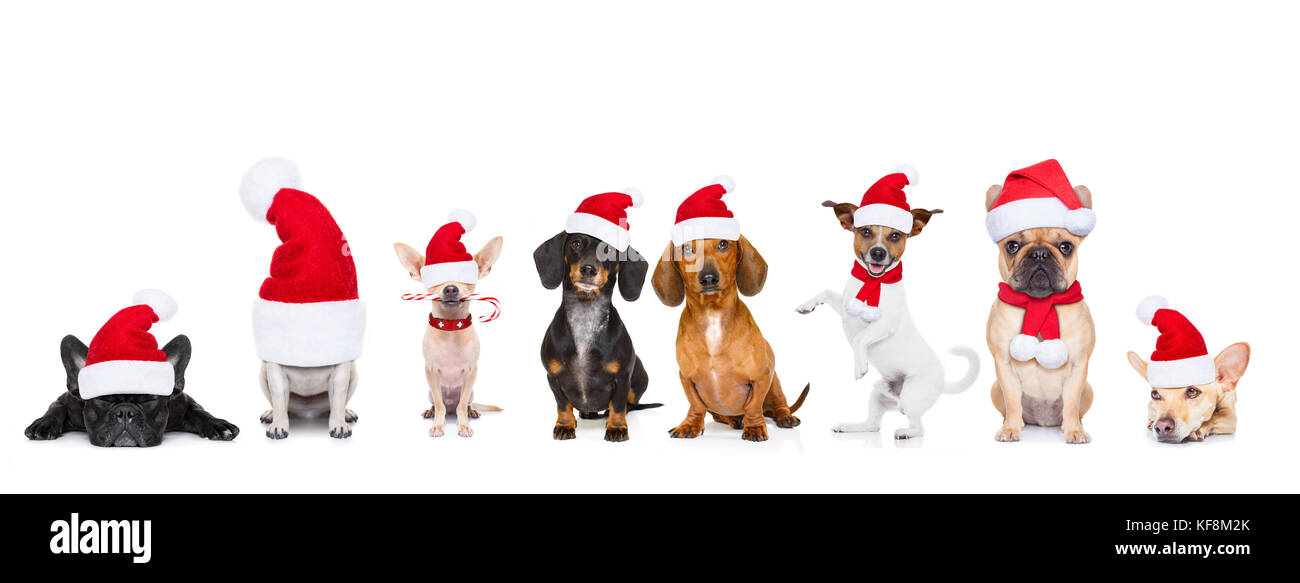 christmas santa claus row of dogs isolated on white background Stock ... 250eccbe99da