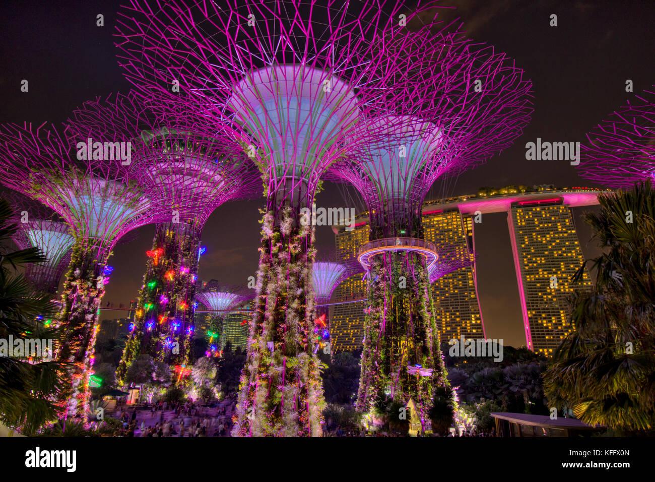 487e240a9fb Supertrees Lit after Dark Marina Bay Gardens Singapore TV000586 ...