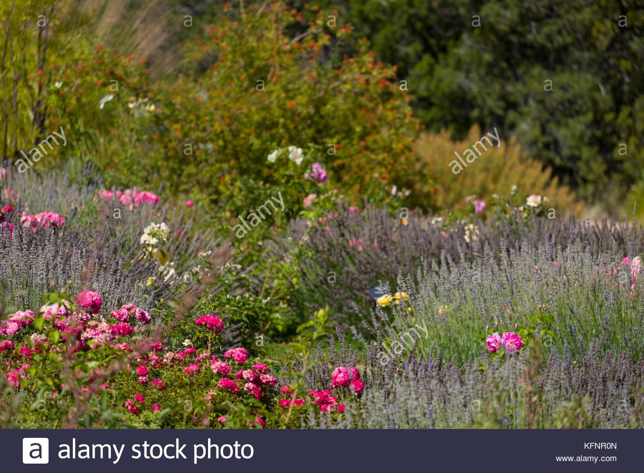 Colorful Flowers In The Santa Fe Botanical Garden At Museum Hill, Santa Fe,  Santa
