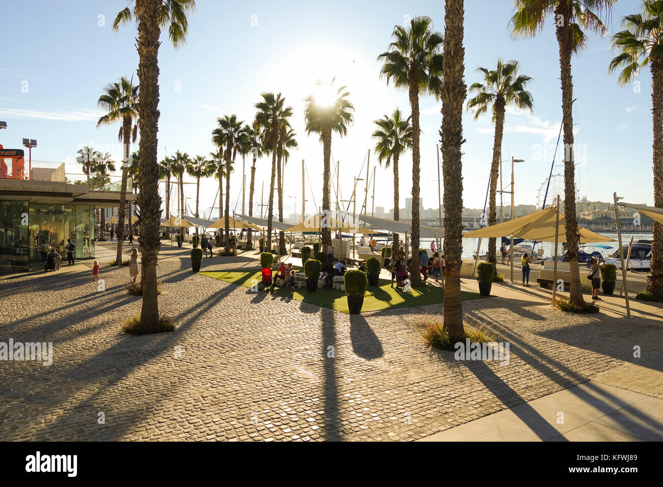 Palmeral stock photos palmeral stock images alamy - Stock uno alicante ...