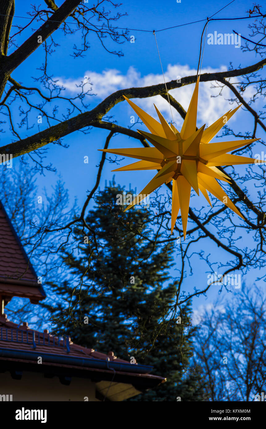 moravian star hanging in a tree for lighting at christmas time