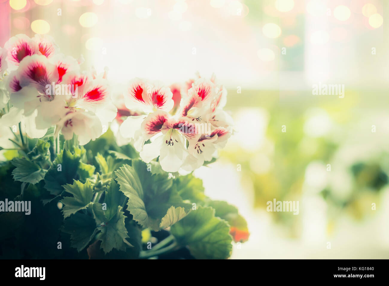 Close Up Of Pretty Flowers At Window Background Stock Photo
