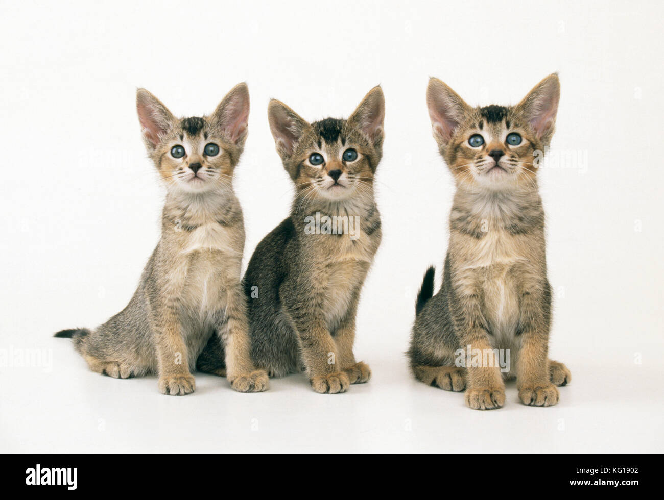 Cute Kittens Row Stock Photos & Cute Kittens Row Stock Images - Alamy