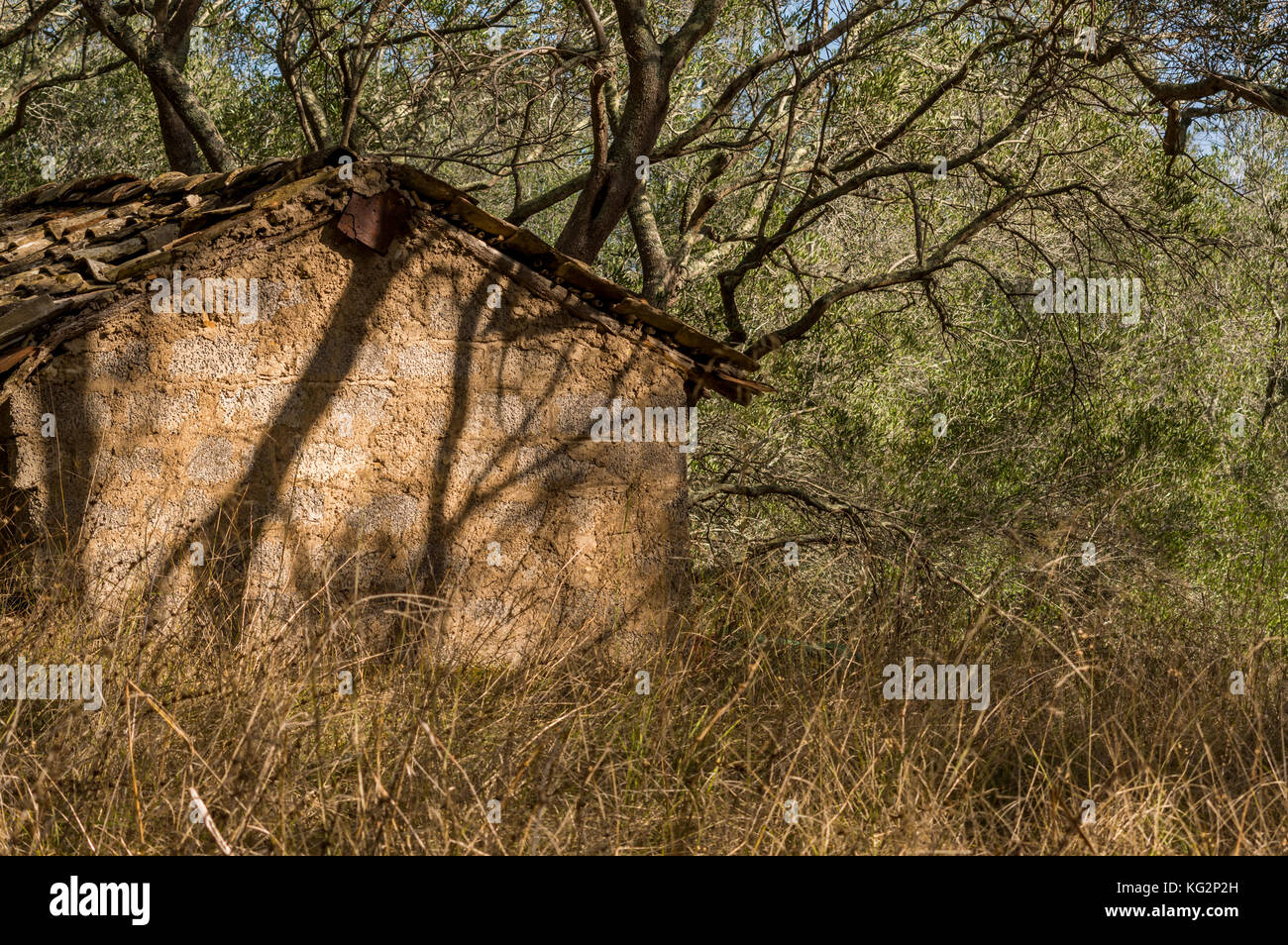 Old abandoned shed between the overgrown olive grove at Corfu Island ...