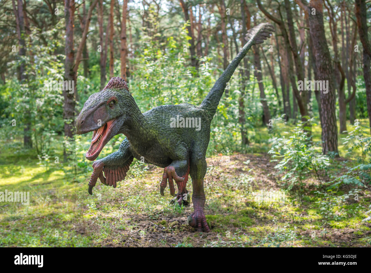 Raptor dinosaur stock photos raptor dinosaur stock images alamy - Raptor dinosaure ...
