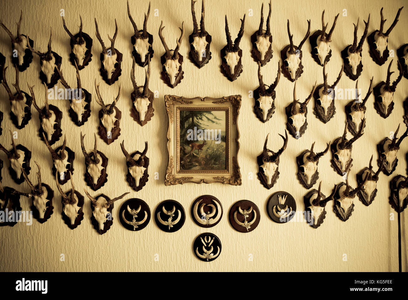 Antlers on the wall, close-up Stock Photo: 164849734 - Alamy