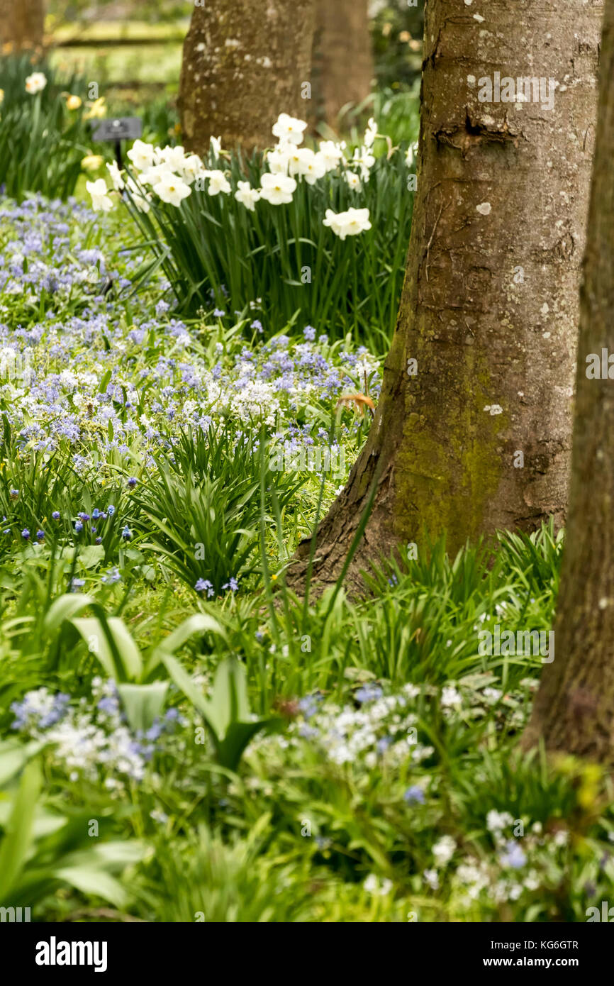 Tree Trunks And Spring Flowers Ireland Stock Photo 164872759 Alamy