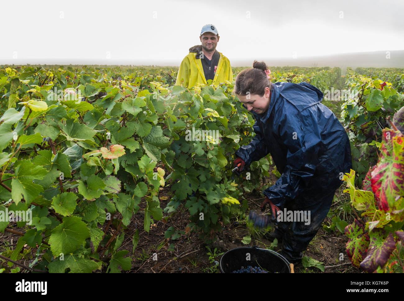 Verzenay stock photos verzenay stock images alamy for Champagne region in france