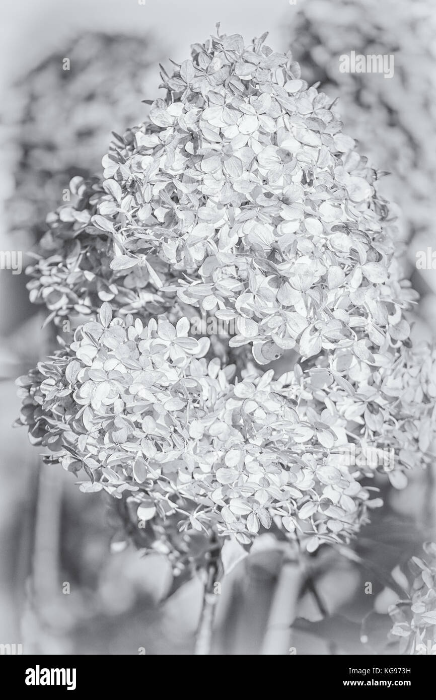 Awesome paper flowers evanescence adornment wedding and flowers fantastic evanescence paper flowers lyrics inspiration best mightylinksfo