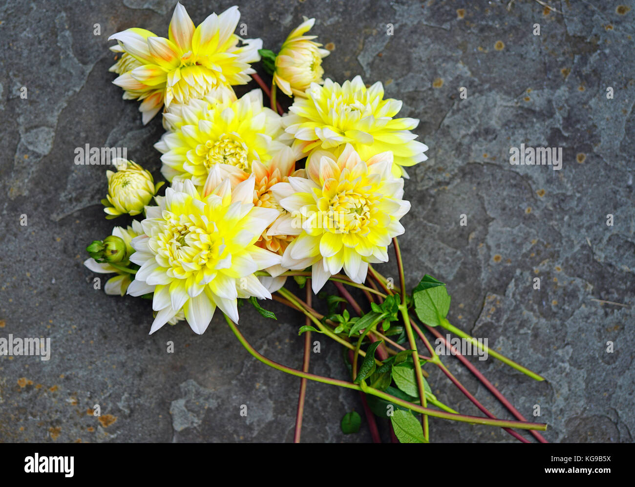 Stems Of Freshly Picked Yellow And White Dahlia Flowers In The Fall